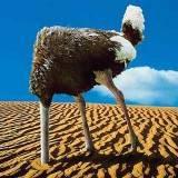 bth_ostrich-burying-head